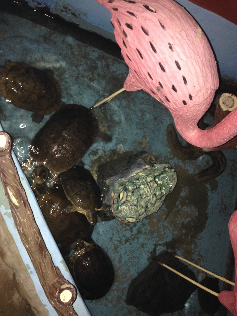 Saw these turtles on the way out, I wondered if we had eaten their friend