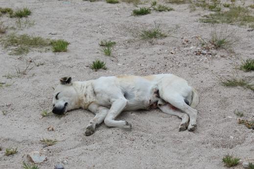 Doggy siesta